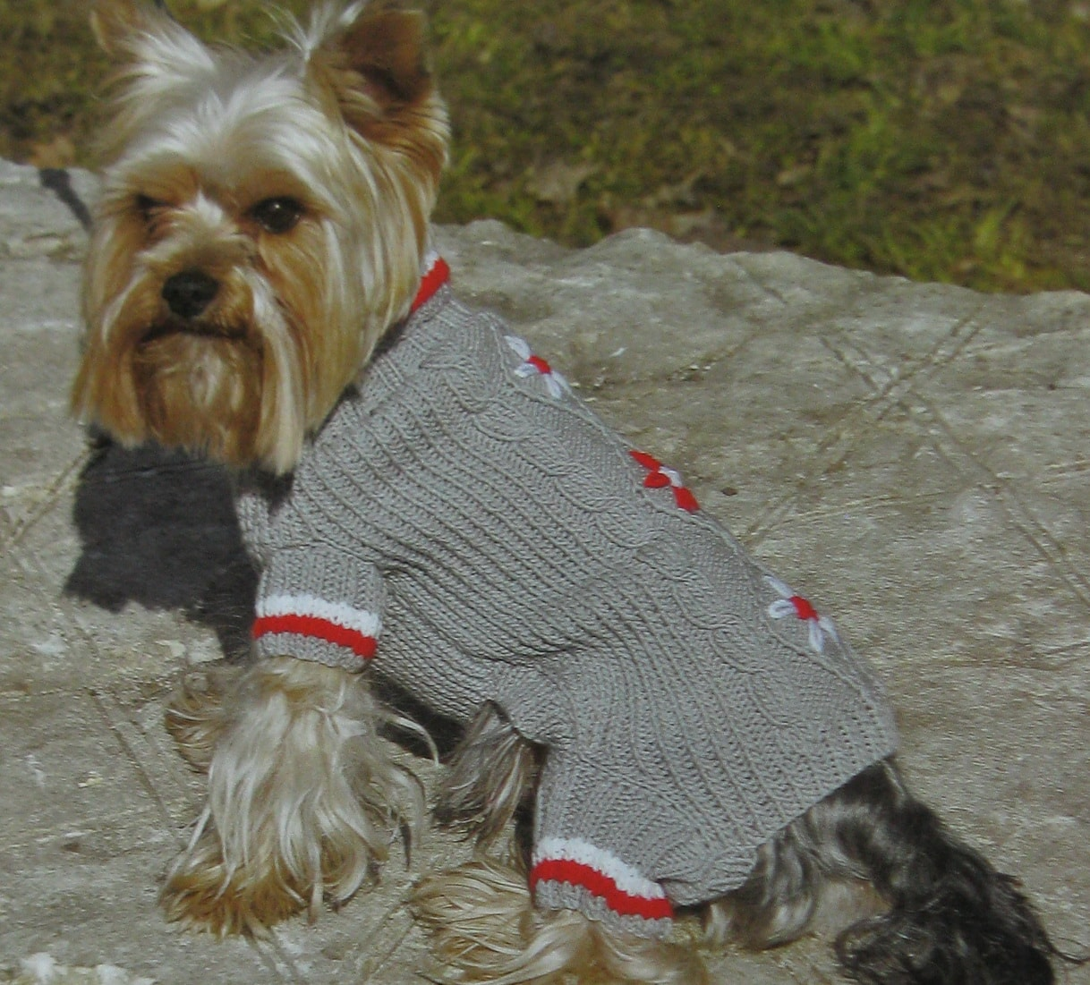Схемы вязания на спицах для маленьких собак