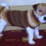 Мастеркласс: как связать  свитер для собаки спицами