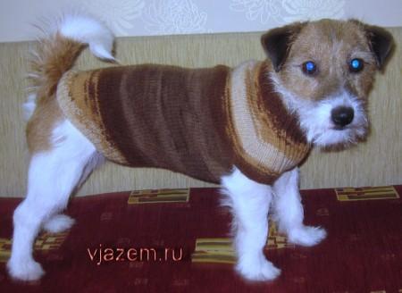 свитер для собаки, как связать свитер для собаки, связать свитер для собаки