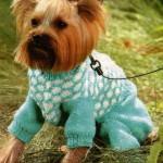Бирюзовый вязаный комбинезон для собаки