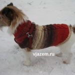 Онлайн: вяжем собакам спицами теплый свитер