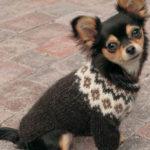 Как связать свитер для чихуахуа спицами