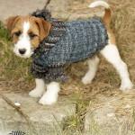 Свитер для собаки из журнала «Drops»