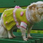 Вязаная одежда для собак своими руками: вяжем платье для собаки