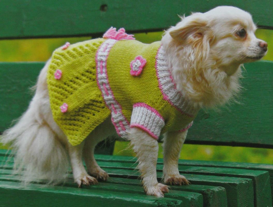 Схема платья для собак фото 426