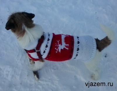 свитер для собаки, как связать свитер для собаки