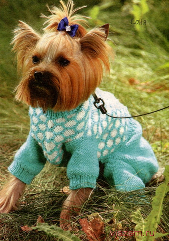 комбинезон для собаки, вязаный комбинезон для собаки
