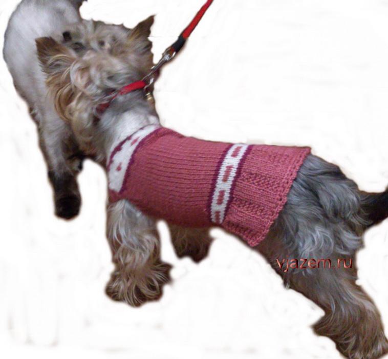 вязание для собаки платья спицами со схемой