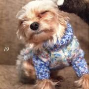 вязание свитера для йорка, схема вязания свитера для собаки