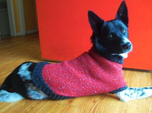 схема вязания одежды для собак спицами